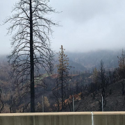 Burned landscape around Redding, CA.